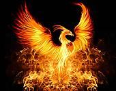 PhoenixImage3