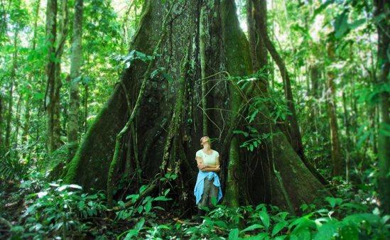 AmazonJungle